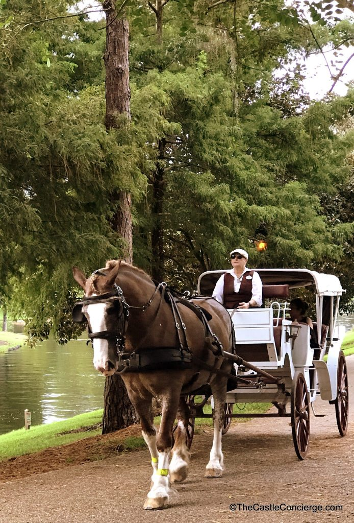Horse Drawn Carriage Ride at Disney's Port Orleans Riverside Resort