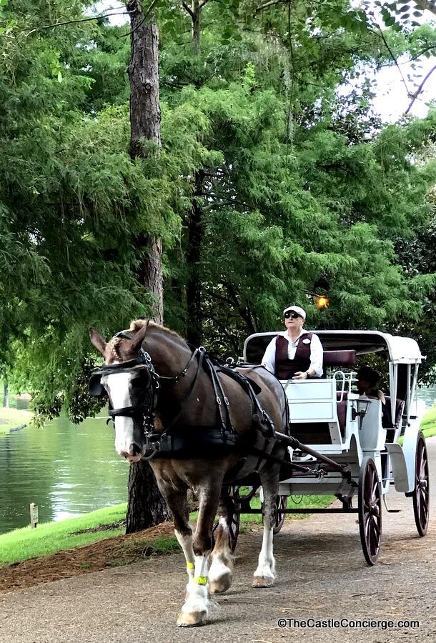Horse-Drawn Carriage Ride Disney's Port Orleans Riverside