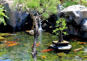 Koi pond in Epcot's Japan pavilion