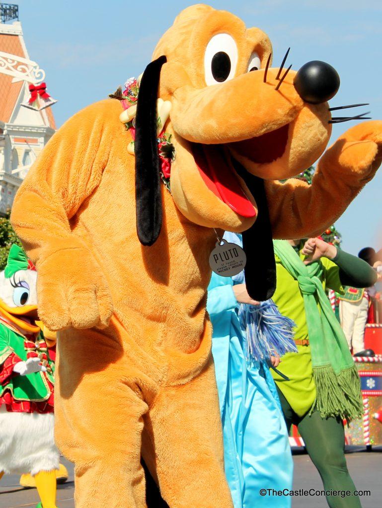 Pluto at Walt Disney World Disney Dog