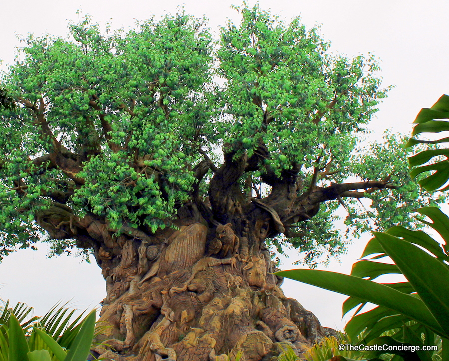 Disney's Animal Kingdom: The Masterful Aesthetics of Design, Immersion and Storytelling/ If you are considering a visit to Disney's Animal Kingdom, but you're not sure if you should include it in your itinerary, then this post will help you! The park is beautifully designed! Click through to check out design details and the magic of Disney storytelling.