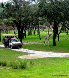 Wanyama Safari at Disney's Animal Kingdom Lodge.