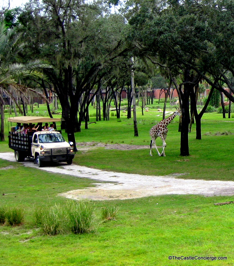 Wanyama Safari at Disney's Animal Kingdom Lodge.